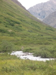 Photo of an Alaska alpine meadow